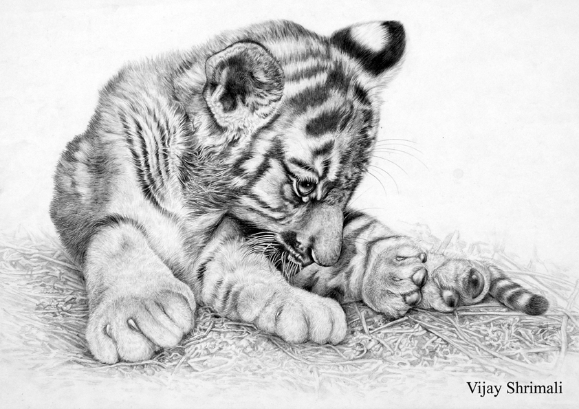 Drawn cub Drawing Art Realistic Images Drawing