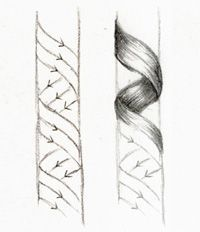 Drawn curl Pinterest curls to draw curly