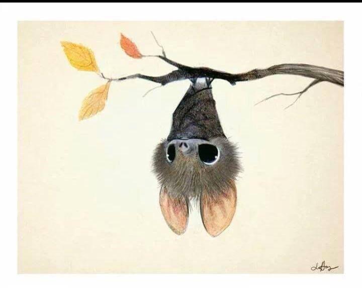 Drawn cute bat Cute 137 on Bat bat