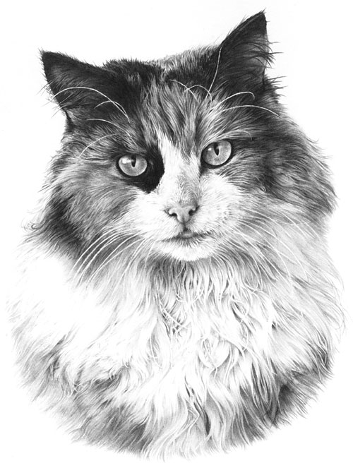 Drawn still life cat Drawing from My whiskers Line