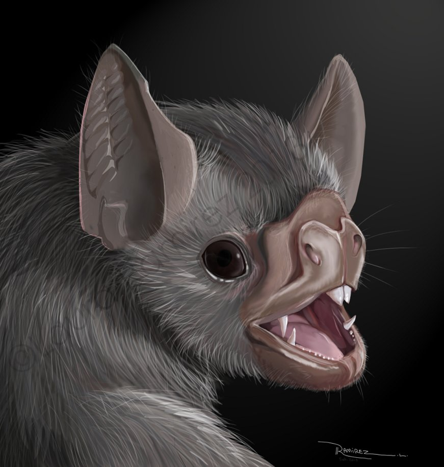 Drawn cute vampire bat Drawing Bat Vampire bat Vampire