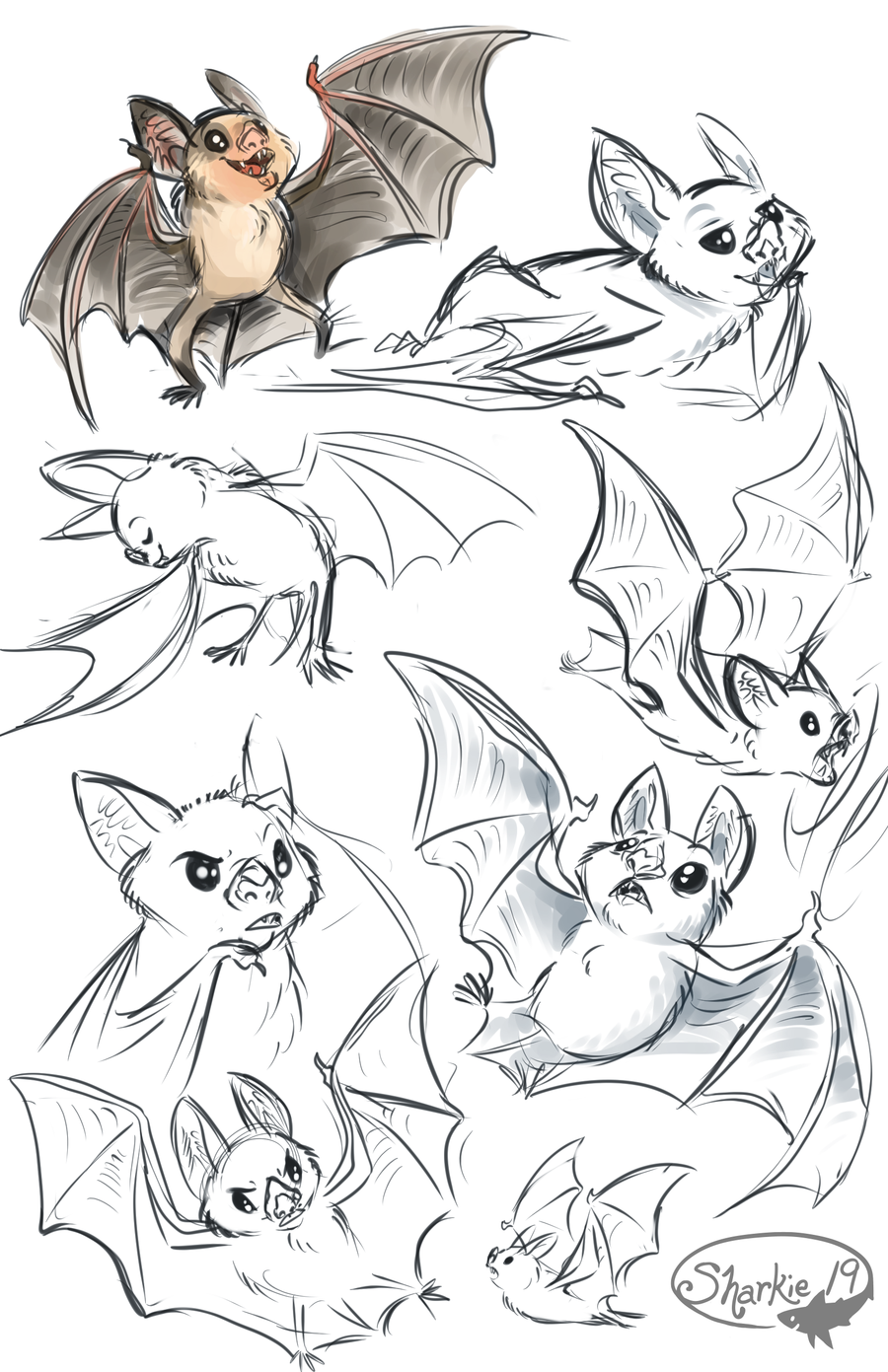 Drawn cute vampire bat Sharkie19 by Bats Bats by