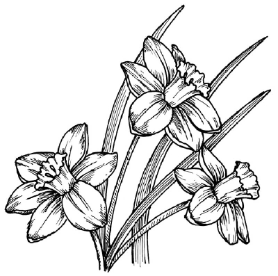 Drawn daffodil Daffodil Learn 5 Image Flower