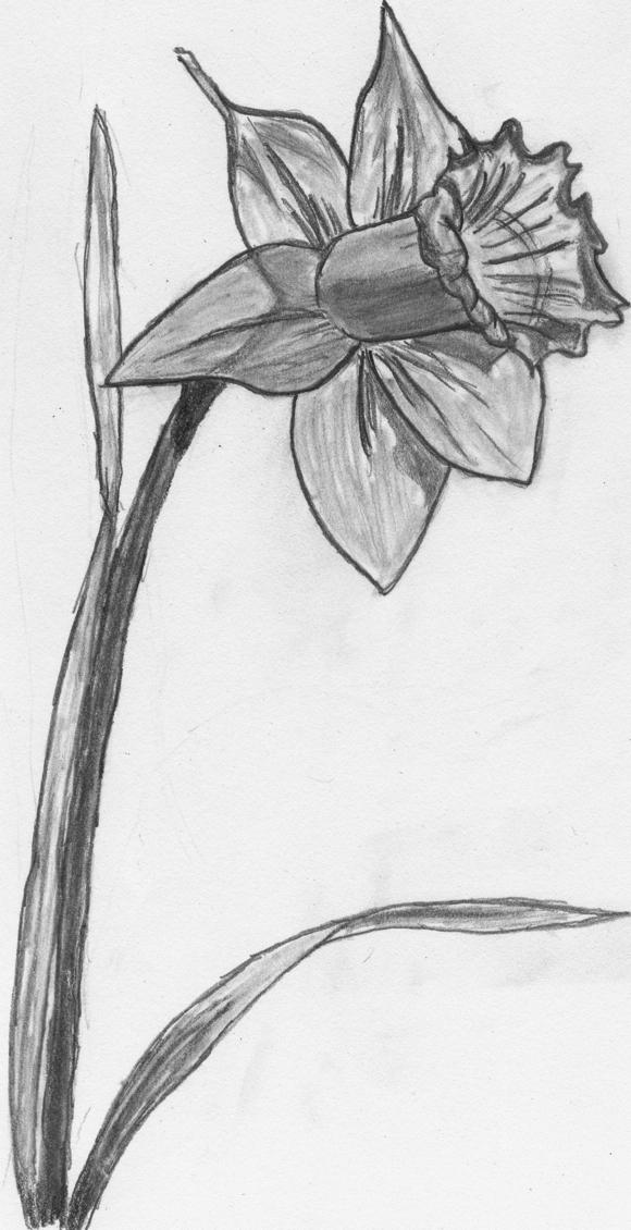 Drawn daffodil Daffodil by Daffodil Rinkle Rinkle