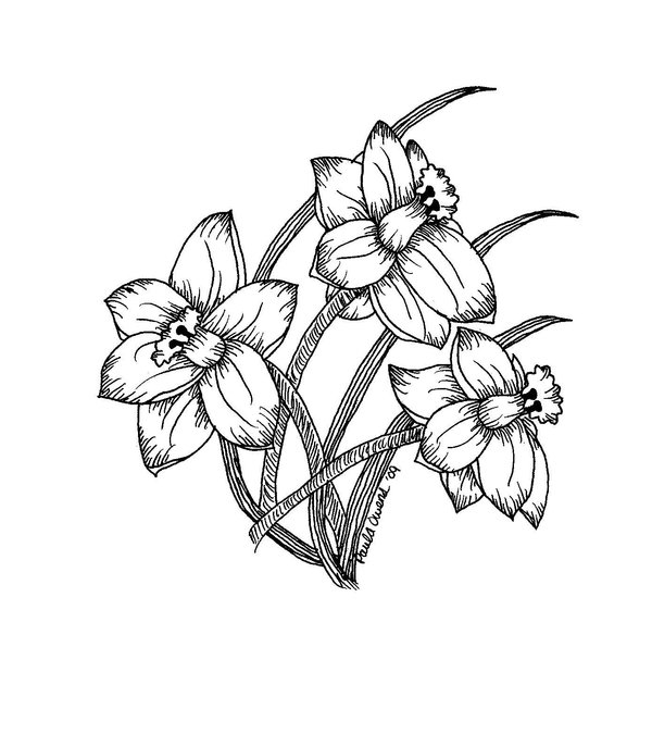 Drawn daffodil Daffodil white black daffodils and