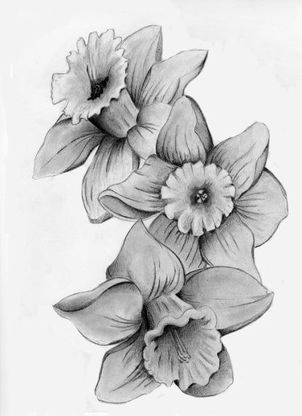 Drawn daffodil Daffodil Image Daffodil Art Drawing