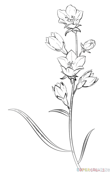 Drawn wildflower beginner Warmup bell by to for