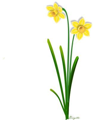 Background clipart daffodil Clip Art Clip Clip Free
