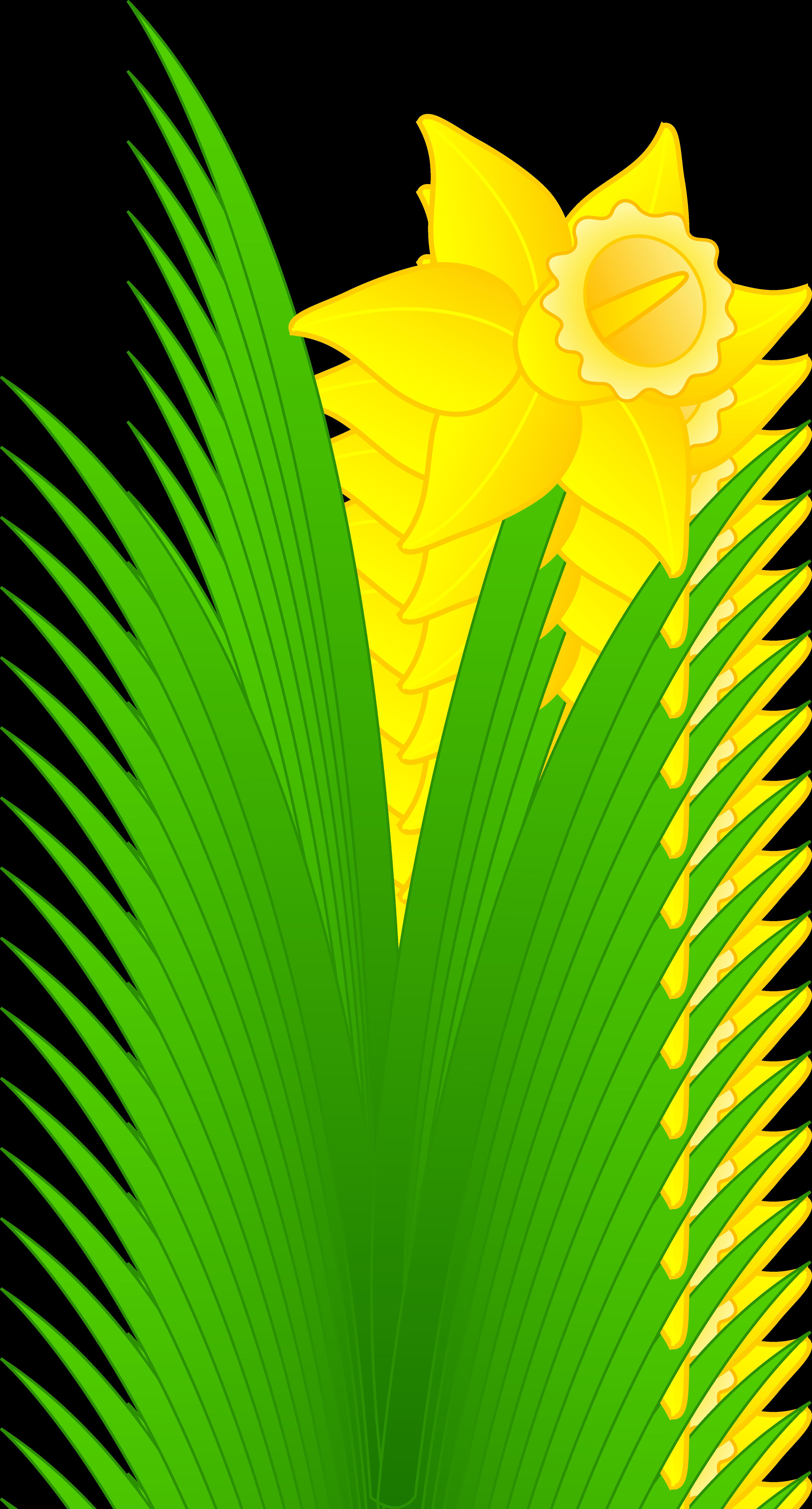 Single clipart yellow flower Art Daffodil Daffodil Flower Single