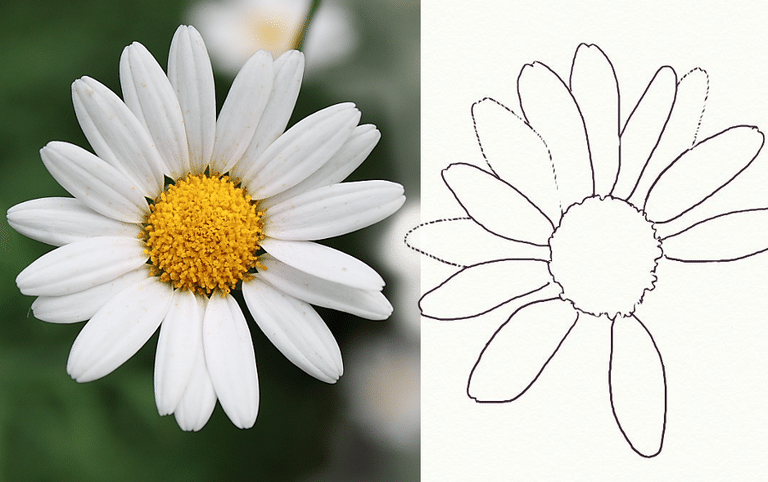 Drawn daisy #7