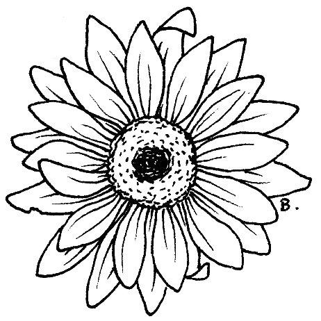 Gerbera clipart sunflower Daisy Free  Cliparts Clip