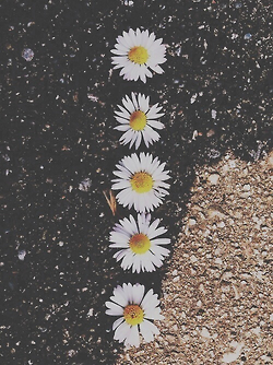 Drawn daisy indie flower #15