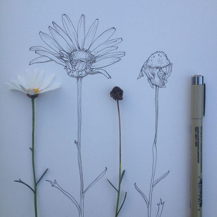 Drawn daisy indie flower #12