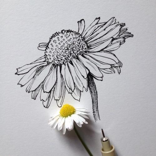 Drawn daisy indie flower #1