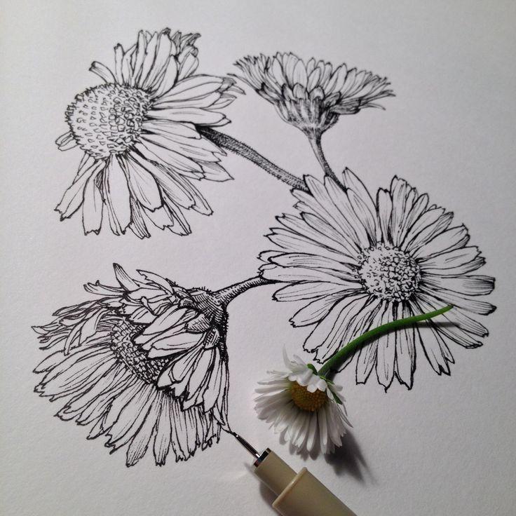 Drawn daisy indie flower #3