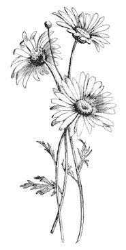 Drawn daisy indie flower #10