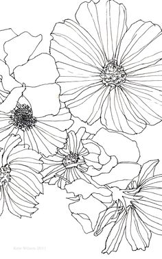 Drawn photos flower Illustration drawing and More sweet