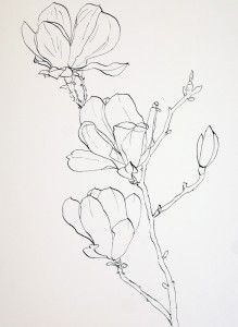 Drawn rose bush pen and ink Line Flower Ink Drawing Pinterest