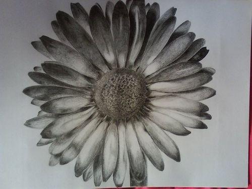 Drawn daisy realistic Pinterest on Tattoo Gallery Flower