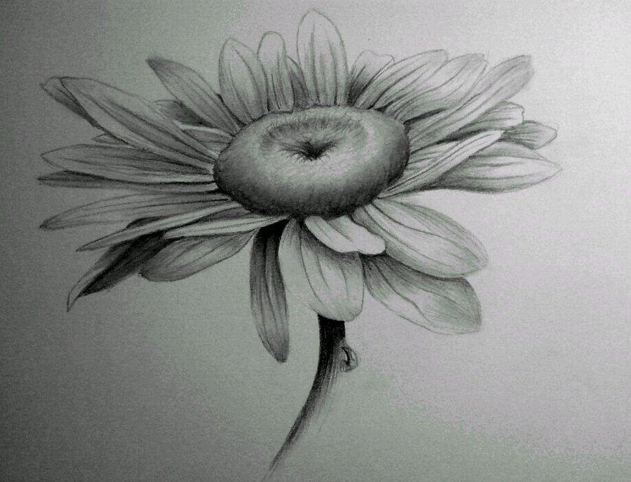 Drawn daisy realistic On by Sketch @deviantART deviantart