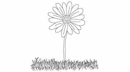 Drawn daisy realistic Images Pencil Daisy Beautiful Realistic
