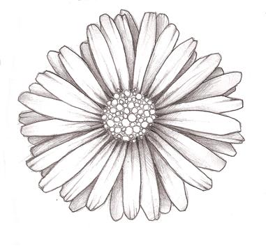 Drawn daisy realistic Tatting Piercings tattoos daisy? Pinterest