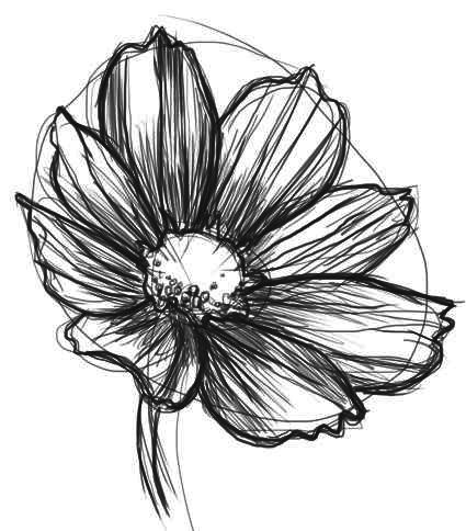Drawn daisy realistic Pinterest on Drawing daisy to