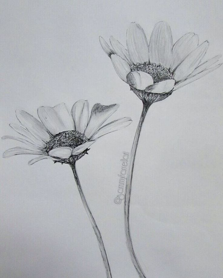 Drawn daisy realistic On best 25+ #artwork #sketching