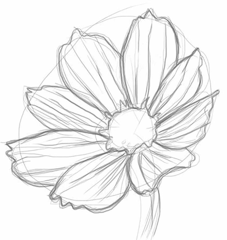 Drawn rose different flower Images or Just on ideas