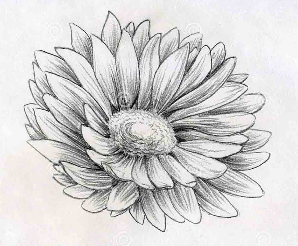 Drawn rose pencil outline Search to to Search with