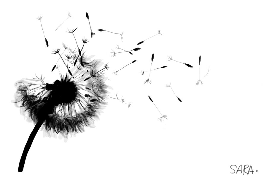 Drawn dandelion Pencil Dandelion Drawing Dandelion Images