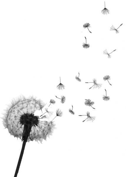 Drawn dandelion Search Dandelion illustration Pinterest dandelion