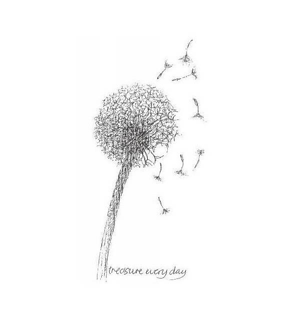 Drawn dandelion Of ink  drawn co