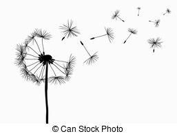 Drawn dandelion Dandelions photography 594