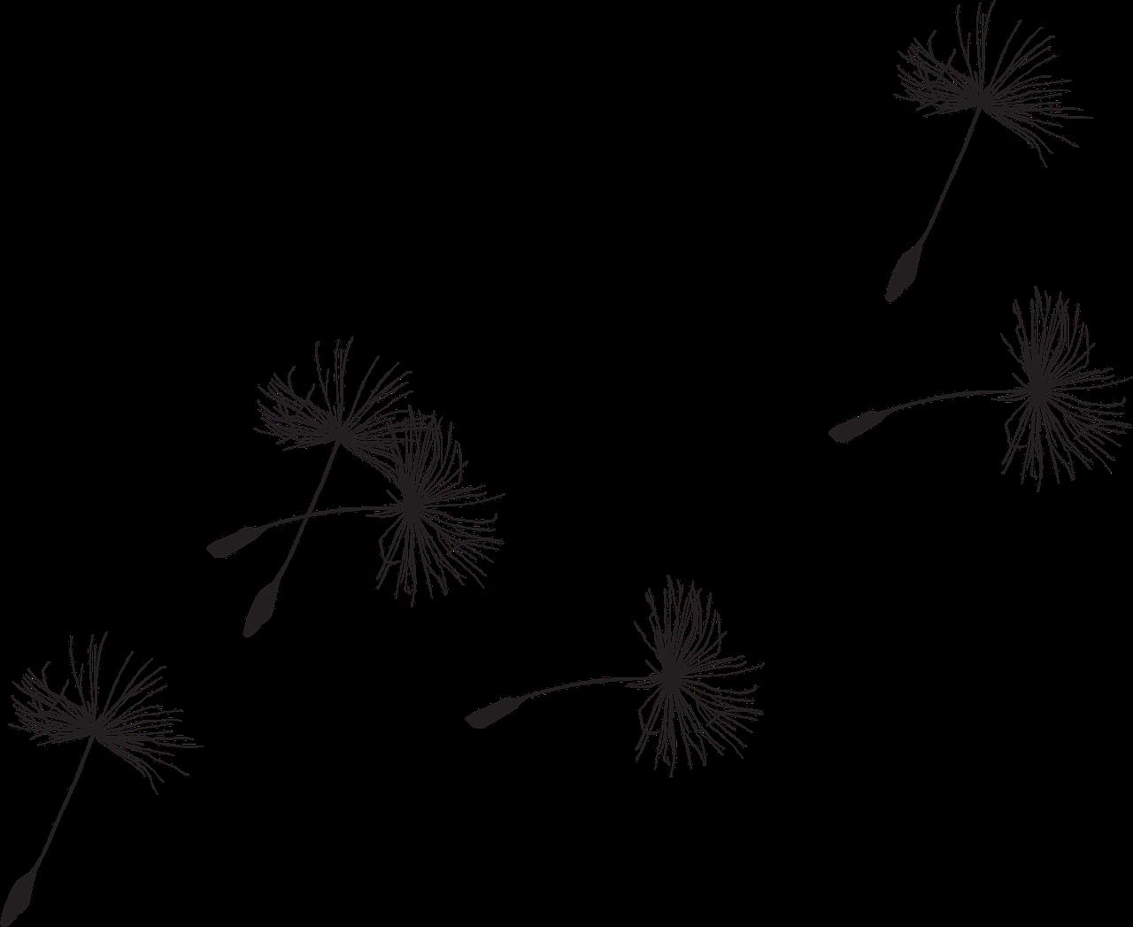 Drawn dandelion Or pixels