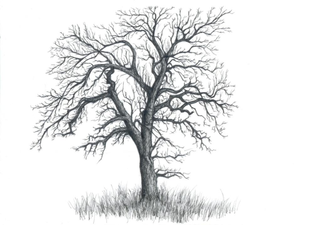 Drawn dead tree Tree a Pie tree How