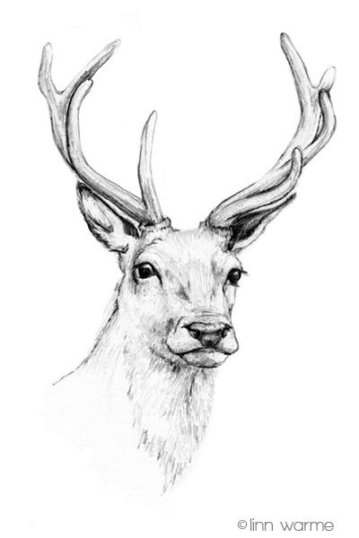 Drawn stag Drawing Pinterest Head ideas on