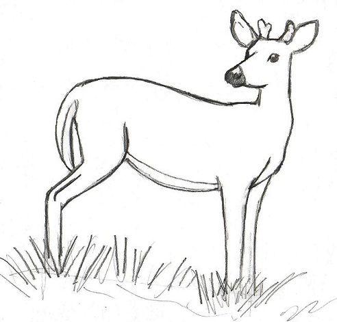 Drawn buck easy Drawing Realistic Drawing Deer Deer