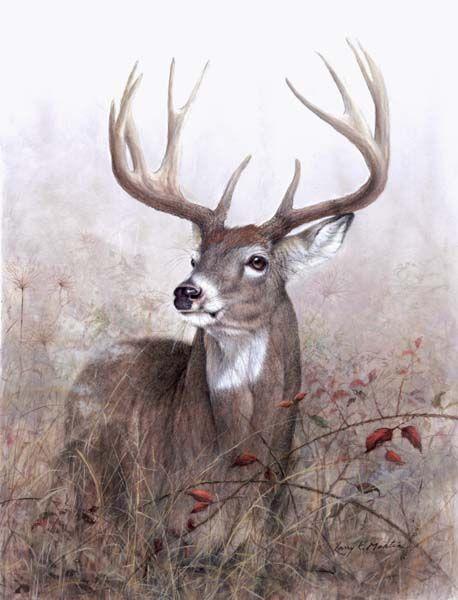 Drawn buck monster And Martin best wildlife ideas