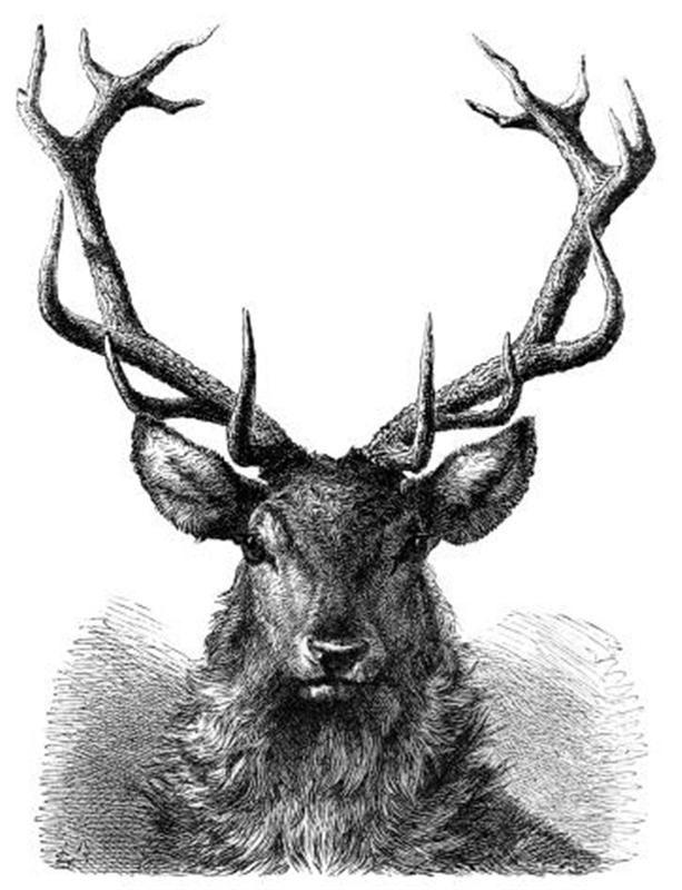 Drawn reindeer illustration Deer Buscar Google head IDEAS