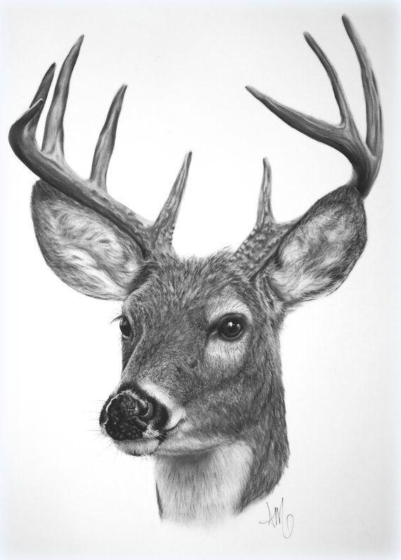 Drawn buck easy On this 198 best DEER