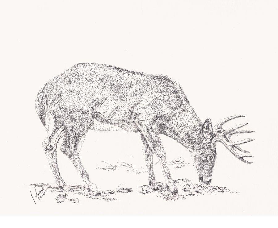 Drawn buck big buck Buck buck Vsemb Vsemb by