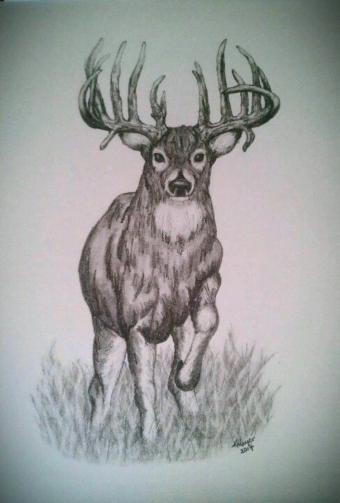 Drawn stag hunting On #drawing by 576 Pinterest