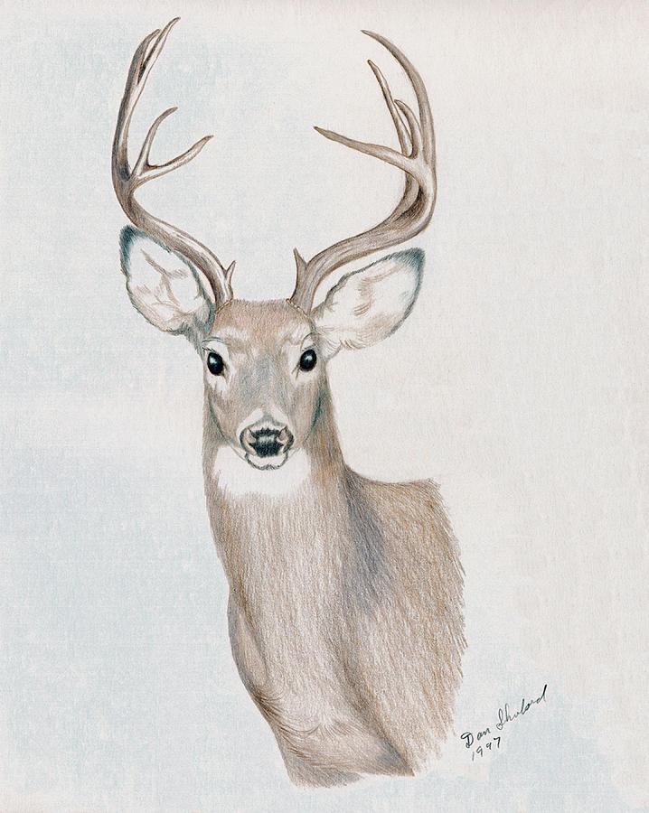Drawn buck big buck Drawing Daniel Buck Big Shuford