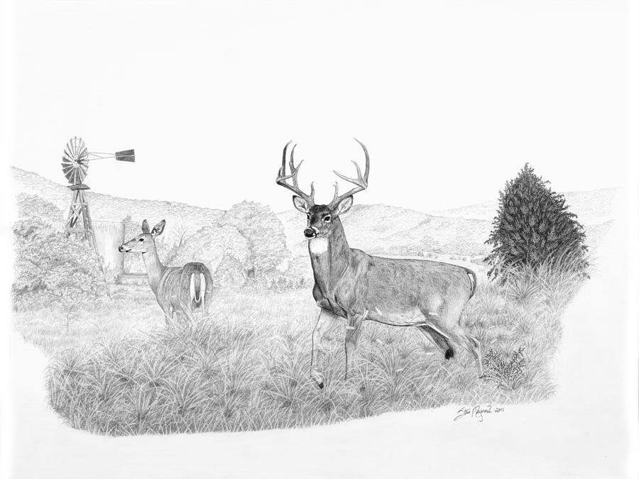 Drawn buck big buck Mill The Guardian by Steve