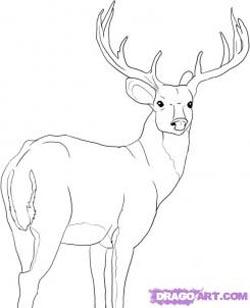 Drawn buck easy Deer Deer Full Children Very