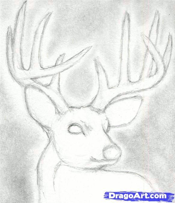 Drawn buck monster Head to deer dear dear