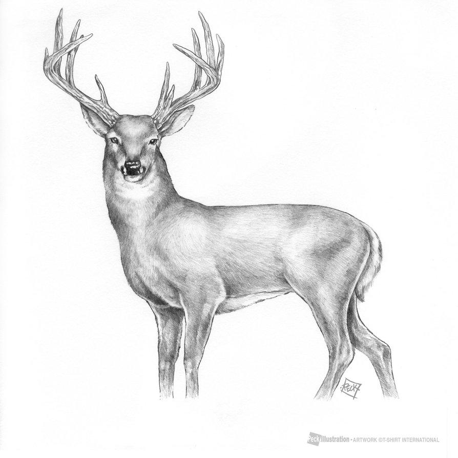 Drawn buck deer head Man deviantart and  Deer