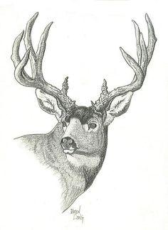Drawn buck deer head How deer a buck Sketch
