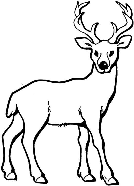 Buck clipart coloring page Drawing Deer For Pix Pinterest